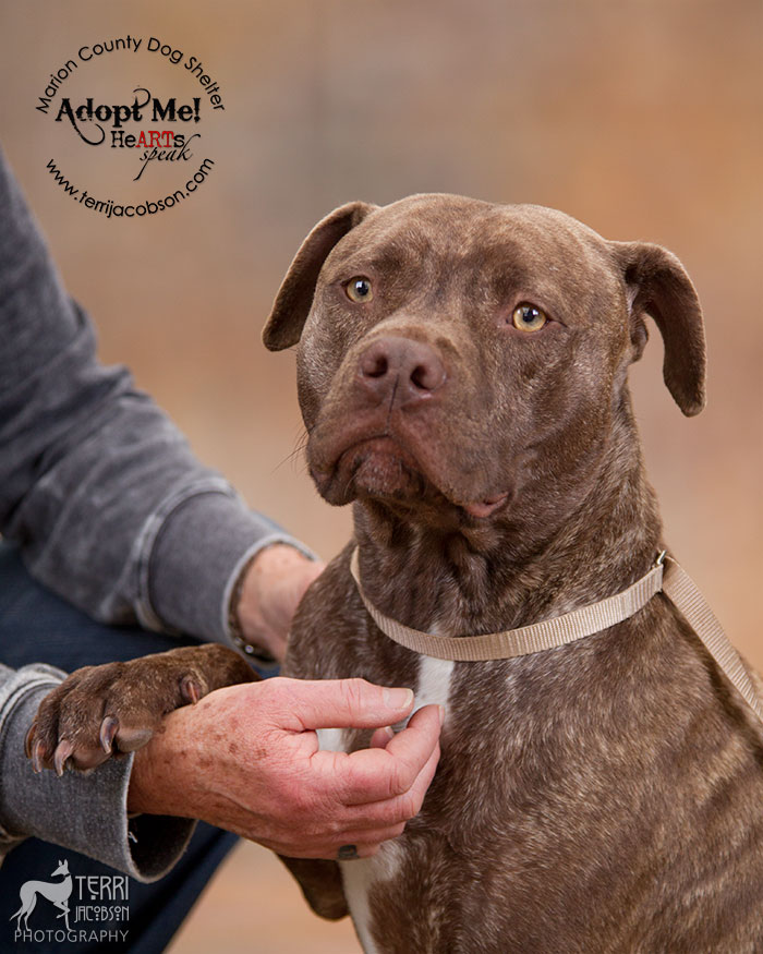 National Pit Bull Awareness Day