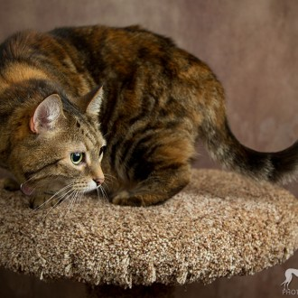 Lucy, a tabby cat