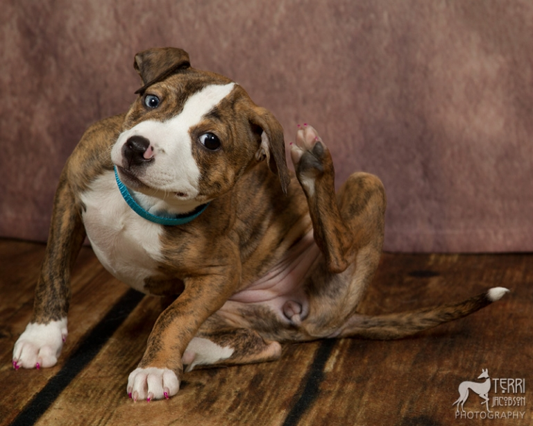 Puppy in foster care for Marion County Dog Shelter