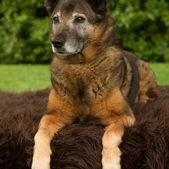 Dog posing for pet photography