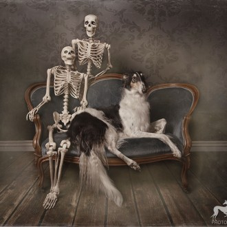 Borzoi posing with two skeletons