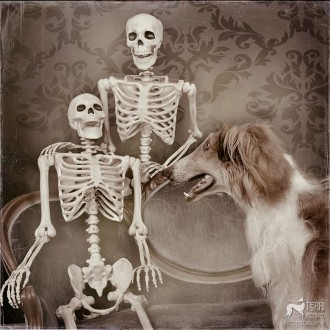 Borzoi posing with skeletons