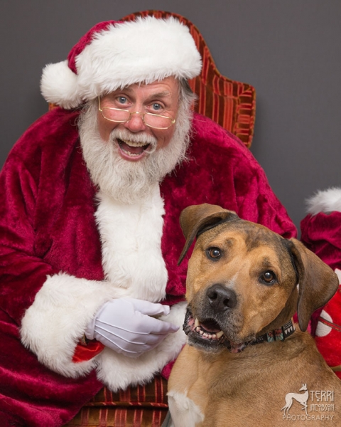 Pittie mix and Santa Paws
