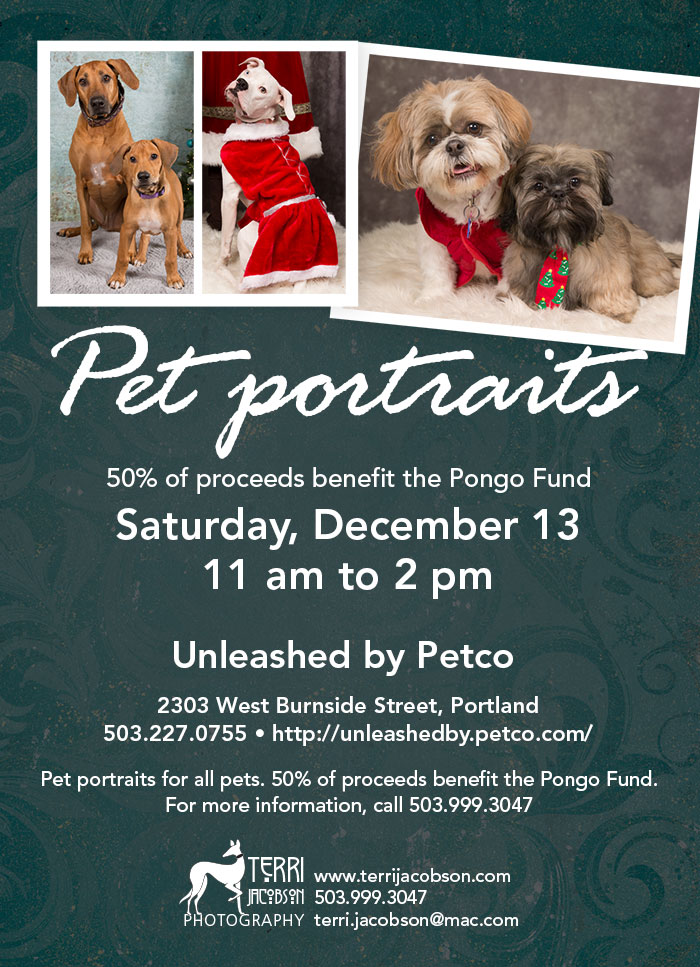 Portraits at Unleashed by Petco on Burnside