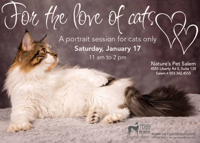 Photography event for your favorite cat