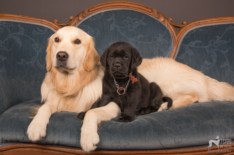 Two assistance dogs