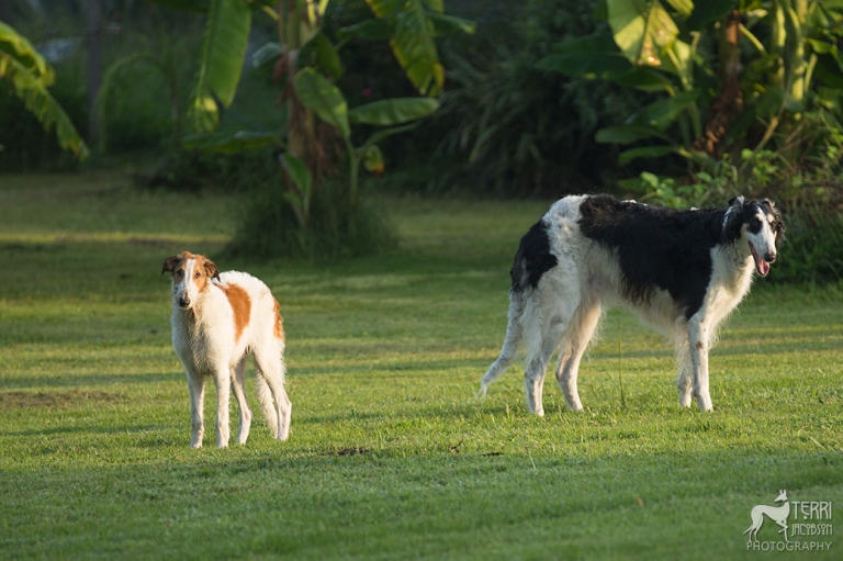 Mama borzoi and her pup