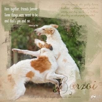 two borzoi puppy
