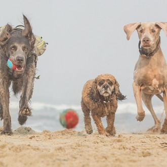 three dogs running on the beach