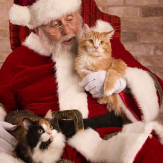 Santa and two kitties