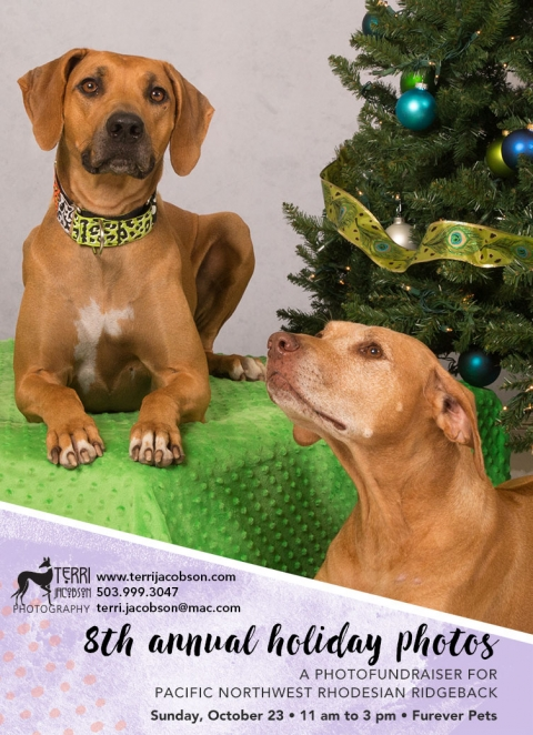 The 8th annual holiday photo fundraiser for Pacific Northwest Rhodesian Ridgeback