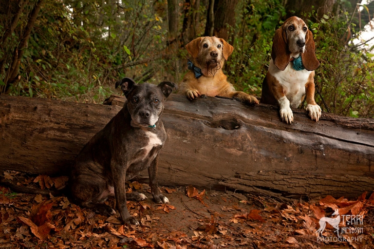 Three dogs by a log