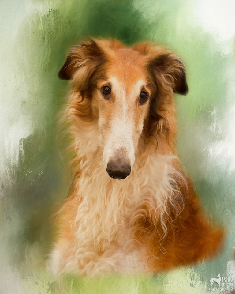 Portrait of red borzoi