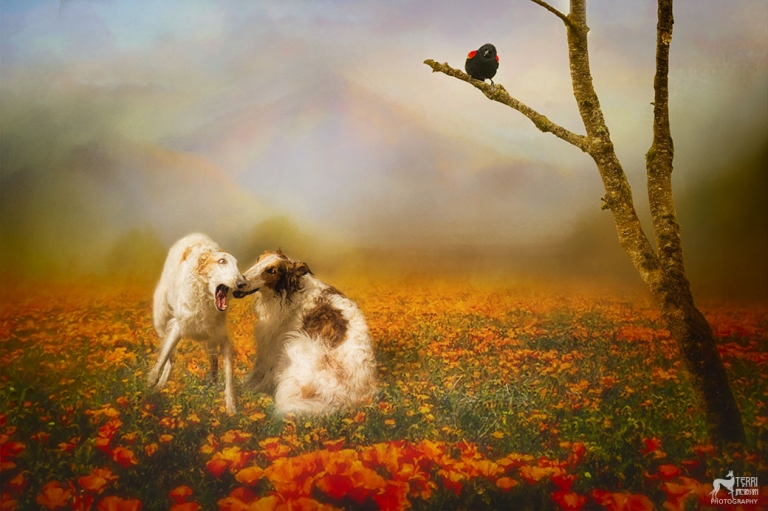 Painting of two borzoi
