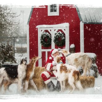 Borzoi with Santa Paws