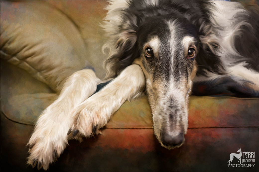 Portrait of a borzoi